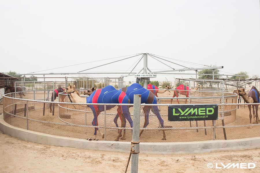 lymed_camel_3
