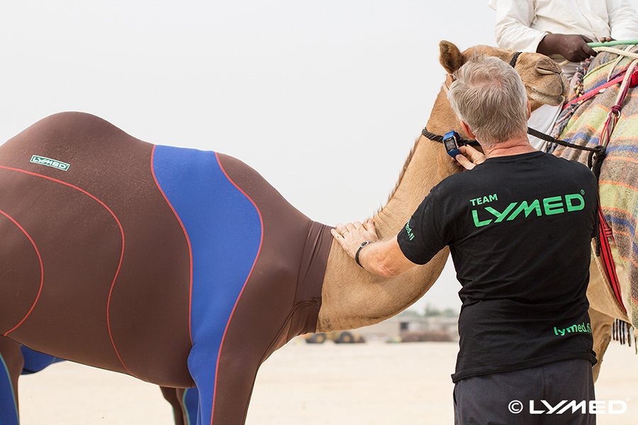 lymed_camel_4