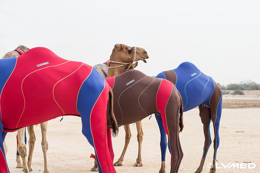 lymed_camel_6
