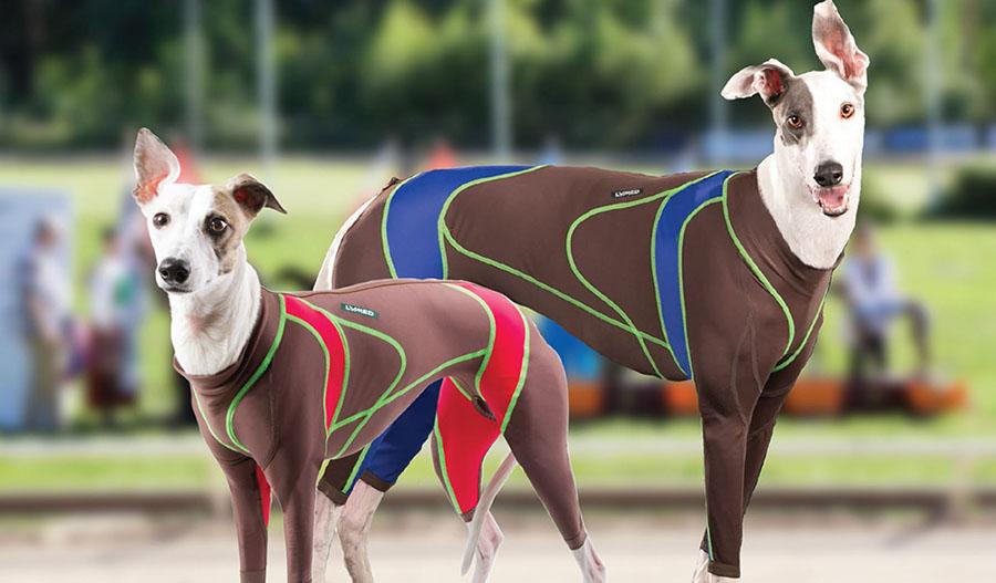 lymed_animal_dog_greyhound