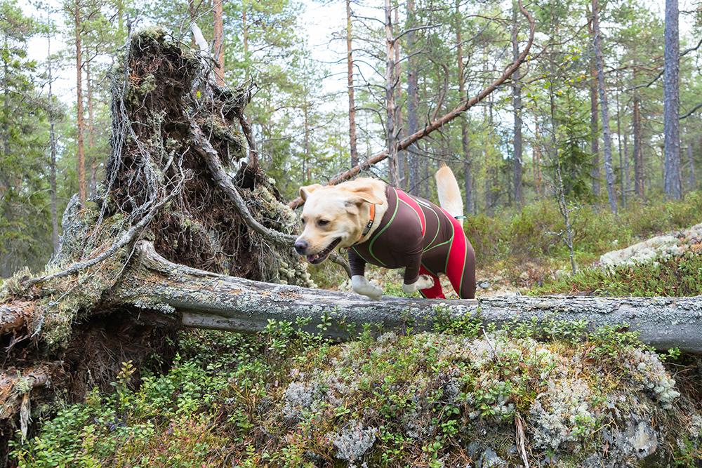 lymed_animal_dog_koira5