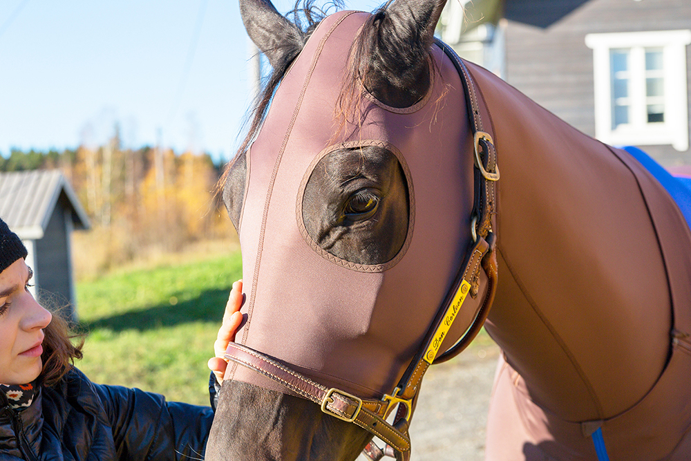 lymed_horse_hevonen_painehaalari5