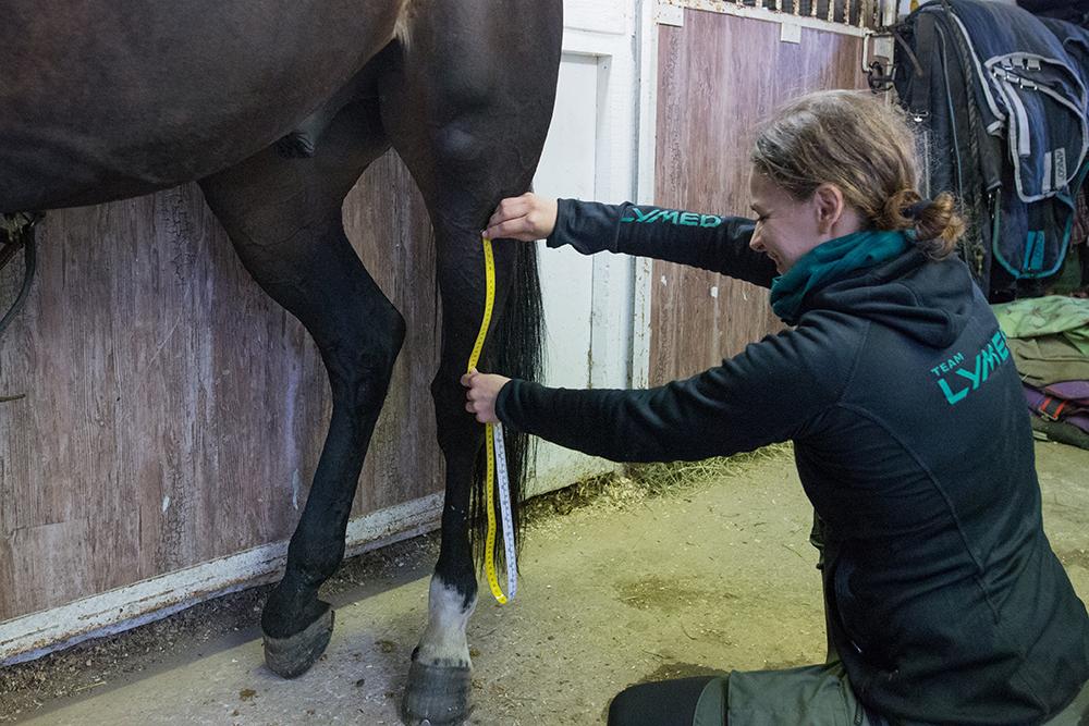 lymed_horse_mittaus