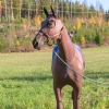 lymed_horse_hevonen_painehaalari2