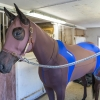 lymed_horse_hevonen_painehaalari4