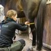 lymed_horse_mittaus2