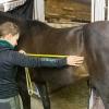 lymed_horse_mittaus3