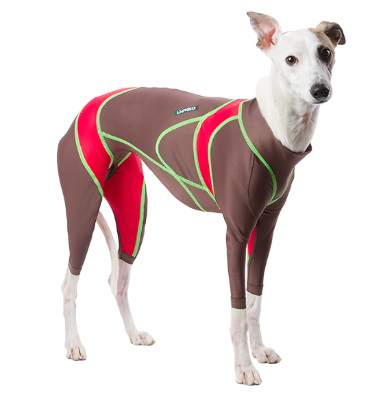 lymed_dog_whippet_small