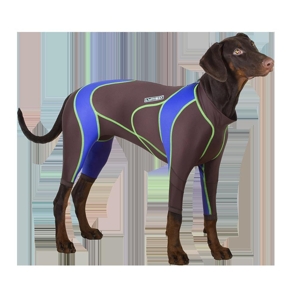 Lymed koira