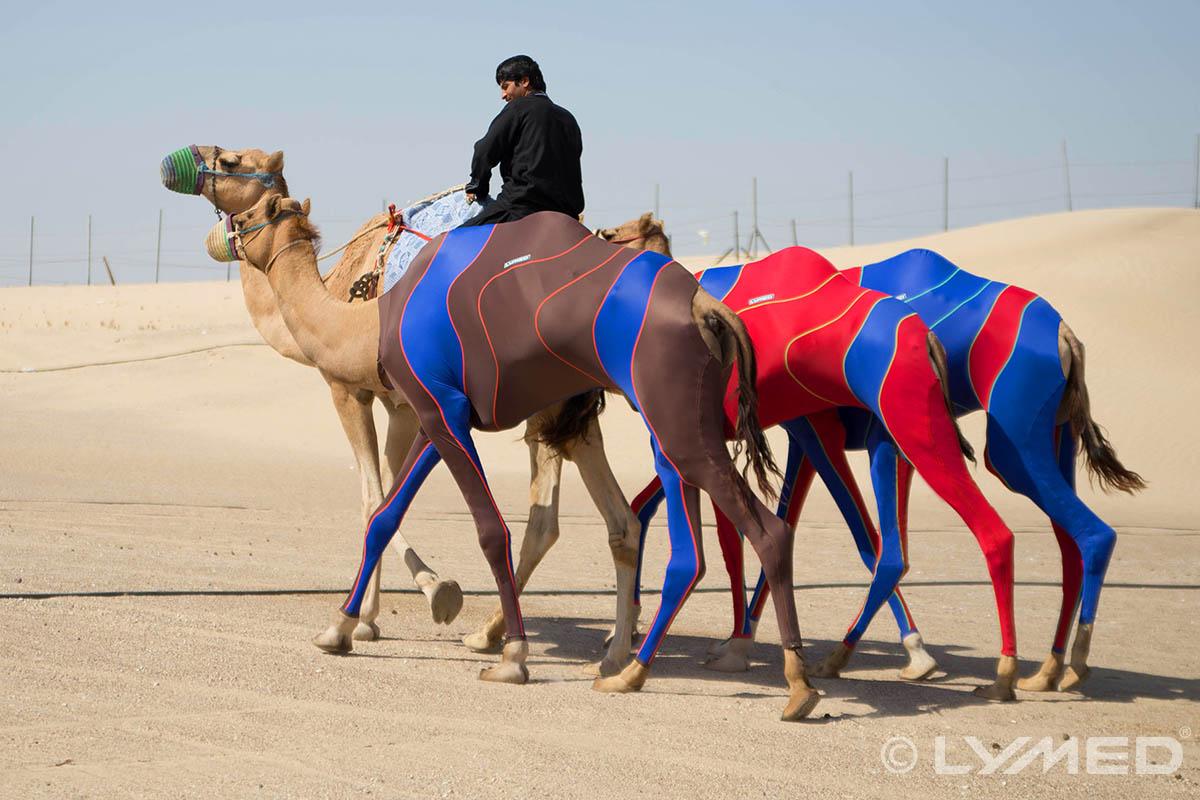 Lymed_camel_compression_1